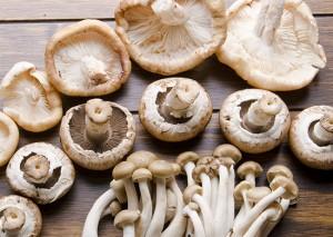 6 potravit_houby