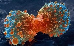 rakovinove-bujeni_image