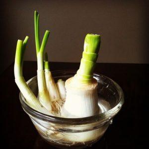 domaci-zelenina-101