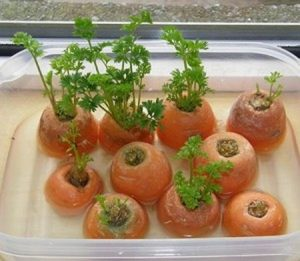 domaci-zelenina-11