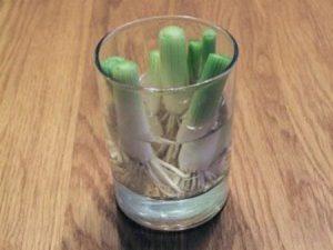 domaci-zelenina-31