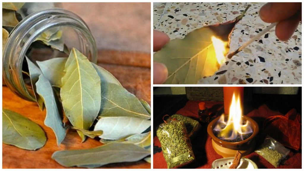 bobkovy list paleni