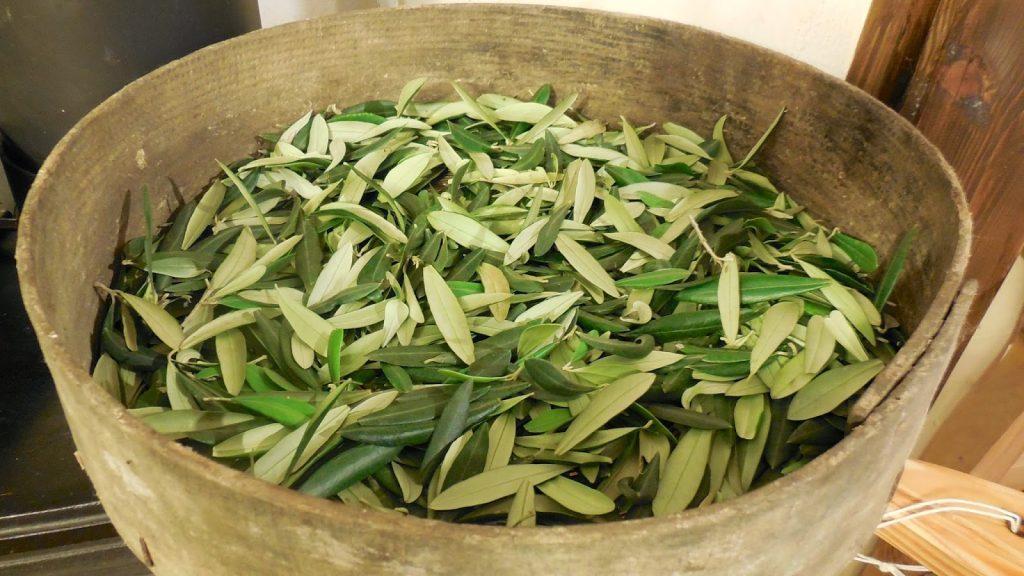 olivove listy