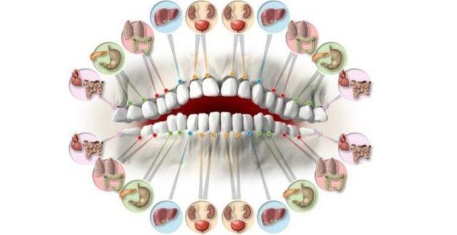 zuby-a-organy